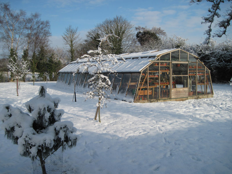 greenhouse snow scene 23.12.2010 001.JPG