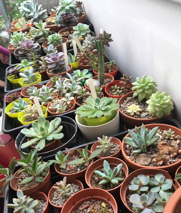 succulents-in-sunroom.jpg